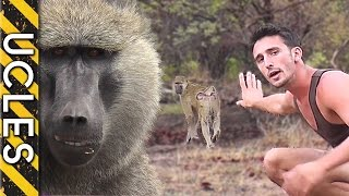 How to approach WILD BABOONS with Andrew Ucles