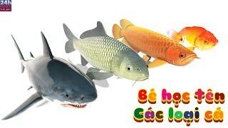 Bé học tên các loài cá nước ngọt và nước mặn hay nhất - Tên các loài cá nước ngọt