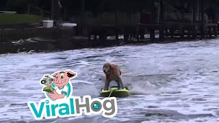 Top 10 ViralHog Videos From March 2016
