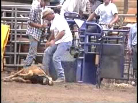 GRAPHIC -- Rodeos Abuse, Maim and Kill Animals Video