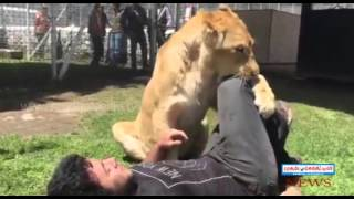 Emotional Reunion Between Lioness Kiara and Man Who Helped Raise Her - mudhalseithi.tv