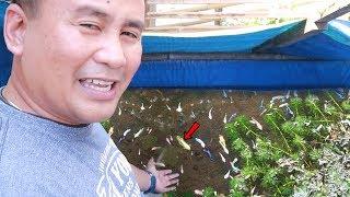 LEGENDARY FISH KEEPER SOLD ALL HIS BETTA FISH