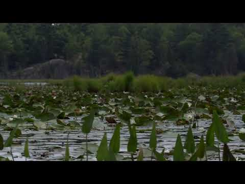 Let The Pads Wake Up For Swamp Dwelling Largemouth - Dave Mercer's Facts of Fishing