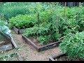 Мой огород. 9 июля. Север Бурятии.