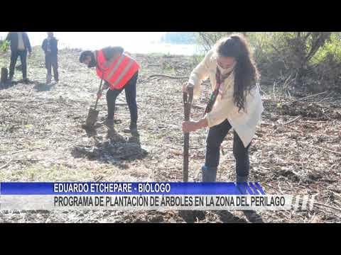 Plantación de árboles autoctónos en la zona del Perilago Salto Grande