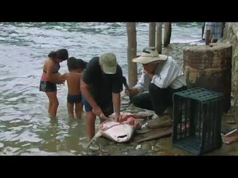 Cabo Corrientes, Jalisco (parte 3 de 3) - De Kiosko en Kiosko C7