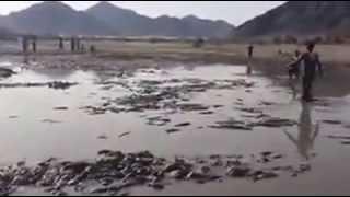 Fishing In Desert Of Saudi Arabia  Amazing Fishing