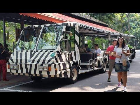 The Tram Singapore Zoo 2