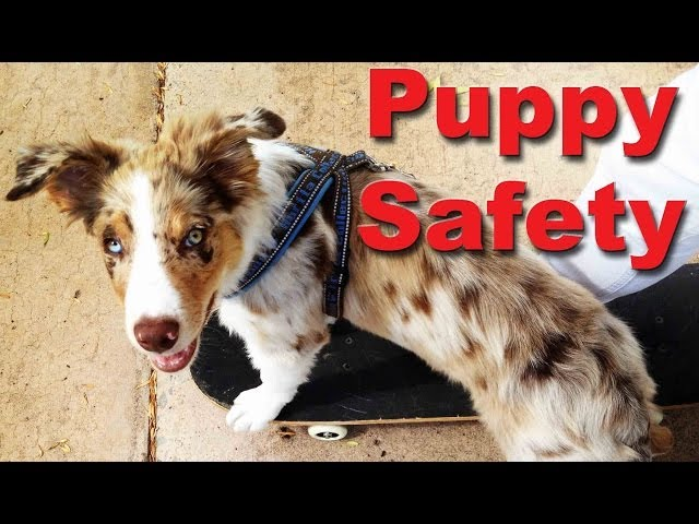 Puppy Safety - Every puppy owner should know this - Dog training videos