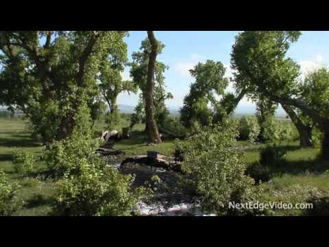 35 Acre Luxury Horse Ranch & Home For Sale - Colorado HD Real Estate Video Tour