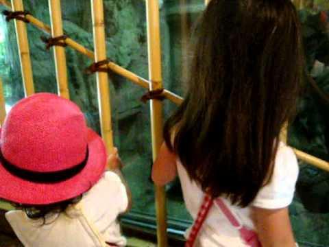 20110713 亜沙&宙奏 クマ赤ちゃんに出会うの巻(上野動物園)