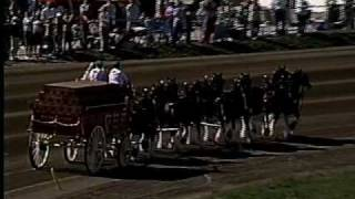 Budweiser Clydesdales at 2008 Little Brown Jug