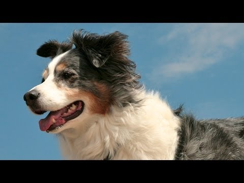 Animal Heroes Who Will Melt Your Heart video