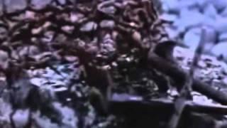 Vídeo 202 de Ministério Jovem