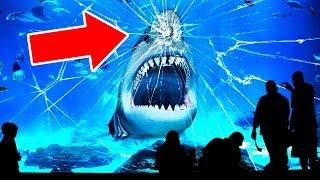É Por Isso Que NENHUM Aquário No Mundo Tem Um Tubarão-Branco