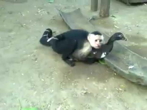 Animales alborotados