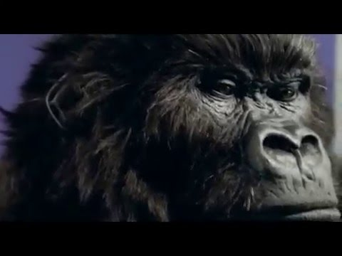 Dairy Milk Gorilla Advert video