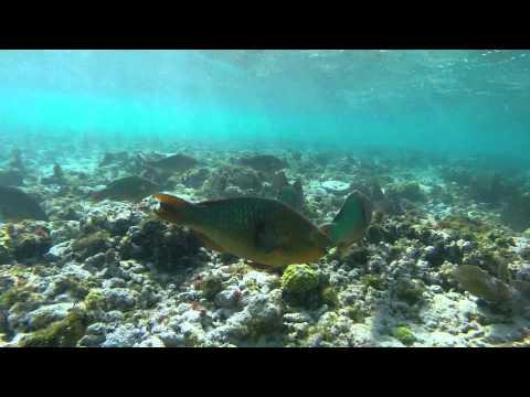 Key Largo Florida Coral Reef Coral Reef State Park Key