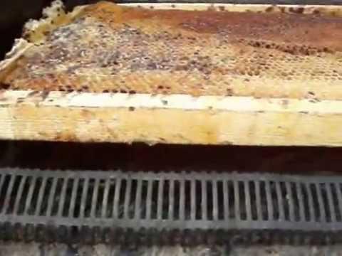 Пчеловодство. Маленькие секреты солнечной воскотопки.