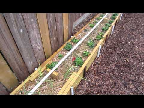 Mittleider Gardening Method: Winter Garden Week 12