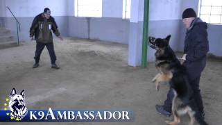 Personal Protection Dog - Brix / K9 Ambassador