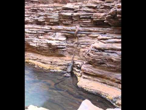 La legendaria Yacumama La más grande serpiente come humanos aún viva
