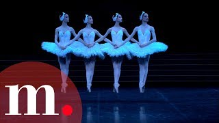 Swan Lake Tchaikovsky Dance Of The Little Swans