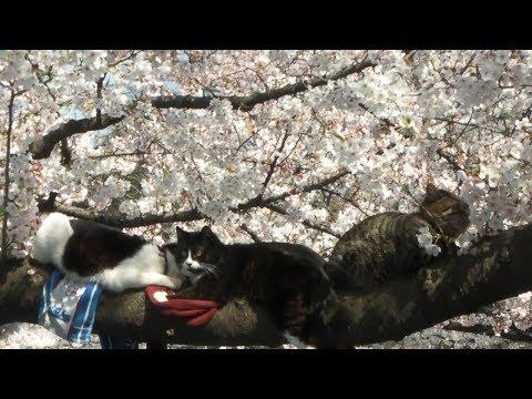 2009年〜2012年の桜