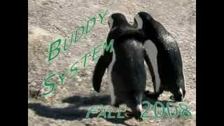 Watch Bobby Darin My Buddy 2001 Remastered video