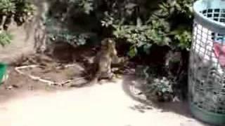 pelea de mis gatos