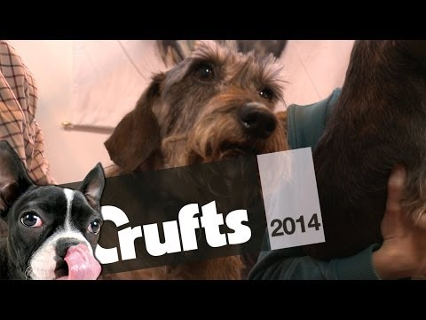 Peter Purves on Dachshunds - Part 2 | Crufts 2014