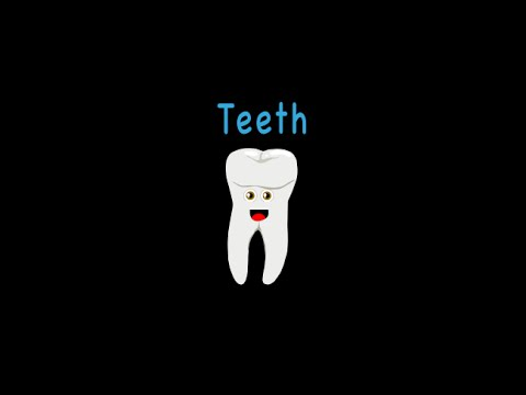 The Human Body for Kids/Learn about the Human Body for Children/Teeth Song for Kids