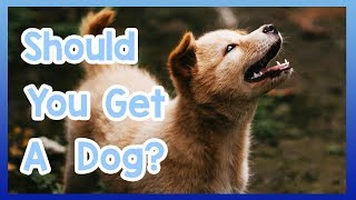 Should You Own a Dog? The Benefits of Owning a Dog!
