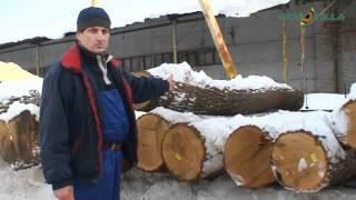Exports of round wood logs oak from Ukraine | Supply to Germany, Italy, China