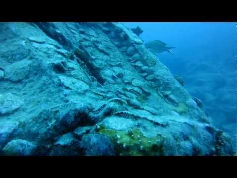 Diving Joe's Tug - May 2012