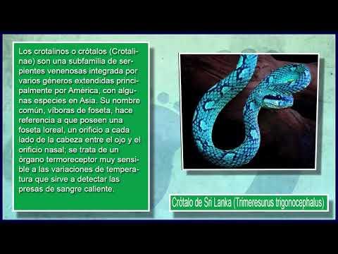 Las 10 Serpientes Más Fascinantes del Mundo-Me Copiate