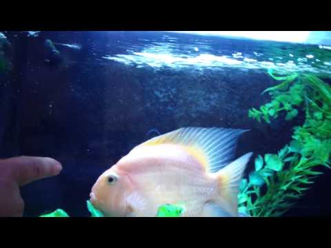 MUST SEE: GOOD CLEVER FISH !!!!!!!!!!!!!