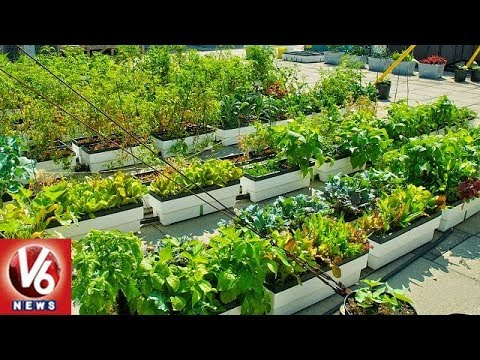 Special Report On Kitchen And Roof Top And Kitchen Gardening In Hyderabad | V6 News