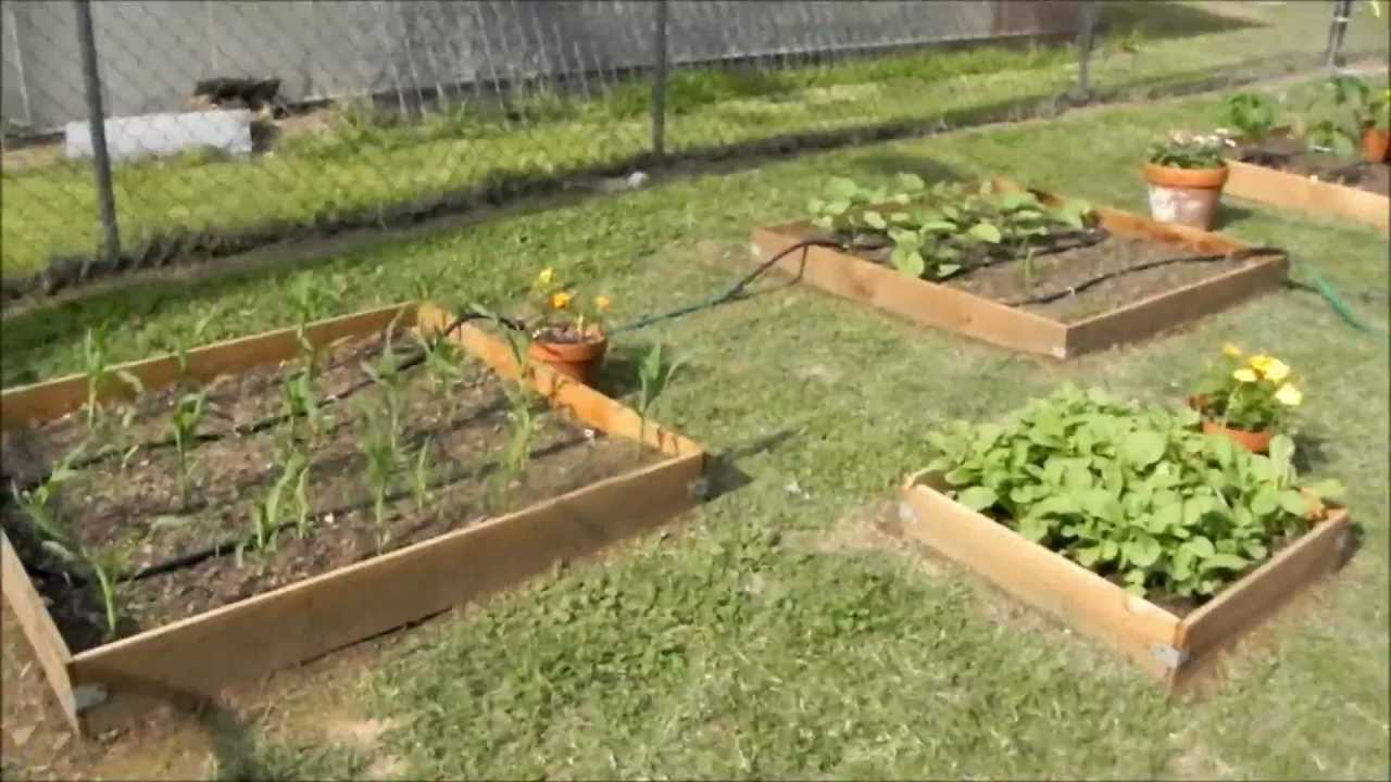 How to Start a Vegetable Garden recommend