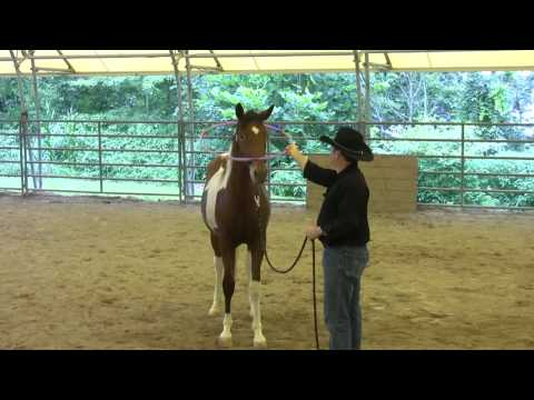 Day 7 - SCEA Rescue Horse - Desensitizing to hula hoops, toys & learning to tie