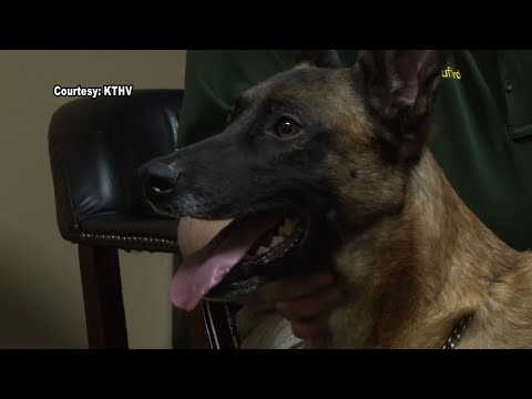 Officers Bid Farewell to Beloved K9 Deputy