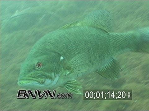 Various Small Mouth Bass Underwater Video 2006, Part 2 of 3
