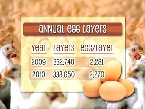 Bottom Line: Egg Recall Impacts Prices