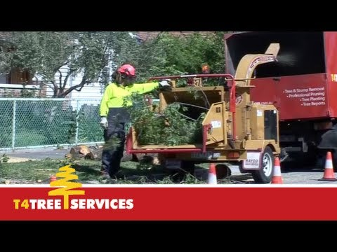 Qualified Melbourne Arborist  |  T4 Tree Services