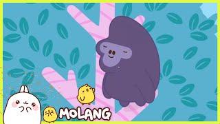 Molang - Ting tong | Full Molang episodes - Cartoon for kids