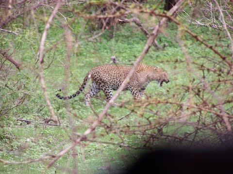 Safari in Yala National Park, Sri Lanka - Luba Travel 2014-11-23