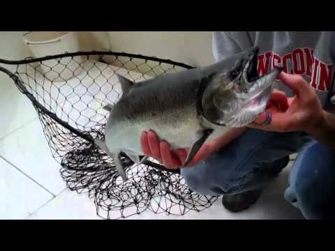 Sheboygan Wisconsin Charter Fishing Reports October 2010 Lake Michigan