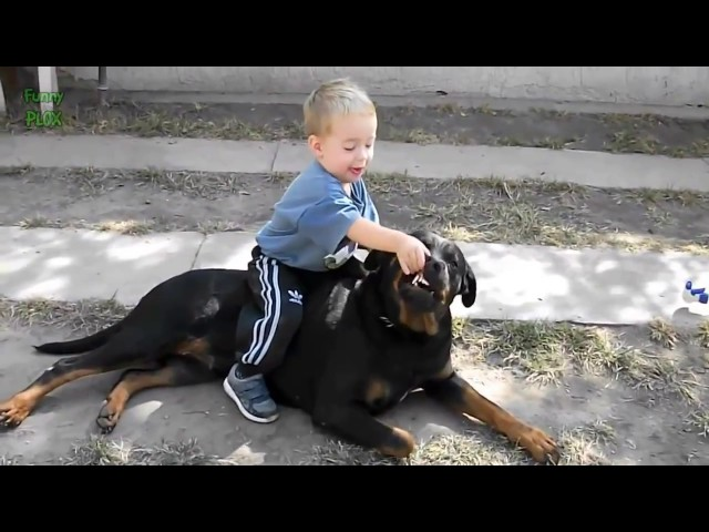 Awesome Dog Can make funn with baby HD Video thumbnail