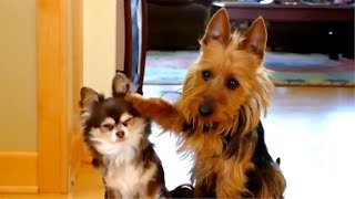 😂 Funny Guilty Dogs 🐶 Compilation