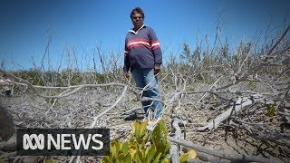 The Top End at the frontline of Australia's most severe climate change, scientists warn | ABC News